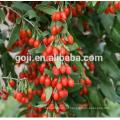 Свежие витамина ягоды Годжи сертифицированные ЕС