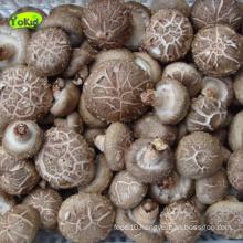 China Frozen Mushroom Export Price