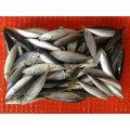 Bqf Small Size Horse Mackerel Fish