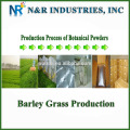 Pure and Natural Organic Barley Grass Powder 80mesh to 200mesh without dextrin