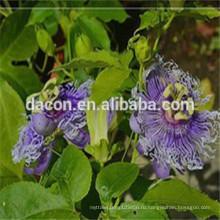 пассифлора флавона 3 % до 20%
