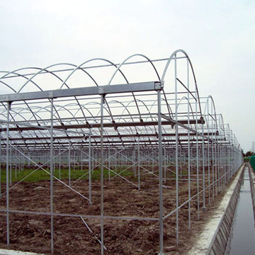 Venlo Multi-Span PC Board Greenhouse