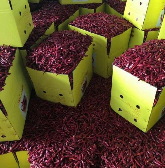 chili materials