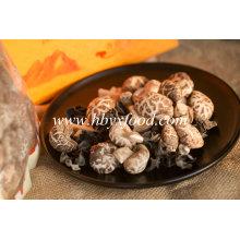 Légumes sains 4-5cm Thin Flower Mushroom