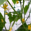 Используемого земледелия HDPE девственницы пожаробезопасный твердые овощи вспомогательная сетка