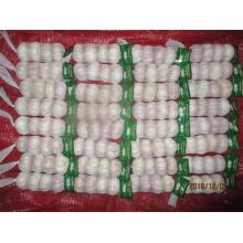 Hot Sale Normal Garlic Fresh