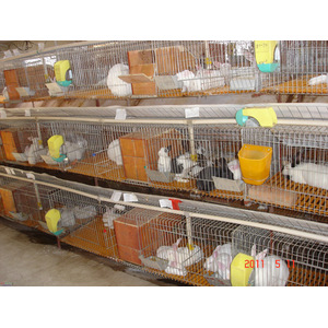 Breeding of Welded Wire Mesh