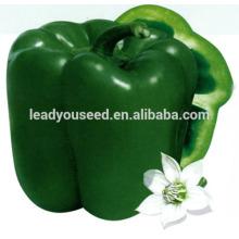 MSP071 Fangzheng vente chaude hybride graines de poivron vert société