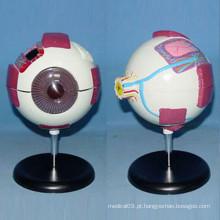 6 vezes ampliou o modelo de anatomia médica do globo ocular humano