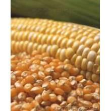 Corn Gluten Meal 60%