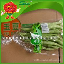 Замороженные стручковые фасоли для продажи, Китайский органический овощ