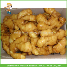 Latest Price of Washed Fresh Ginger Chinese Ginger