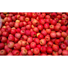 Chinese Fruit Fresh Qinguan Apple