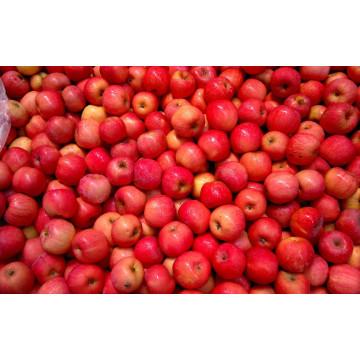 Chinesische Früchte Frische Qinguan Apfel
