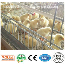 Automatic Pullet Farm Layer/Broiler/Pullet Chicken Cage