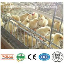 Автоматический фермерский слой / бройлер / клетчатая клетка из куриного мяса