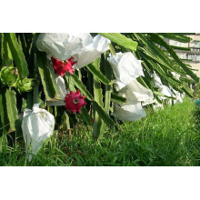 Dragon Fruit Growing Bagging