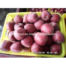 Sweety Huaniu Apfel
