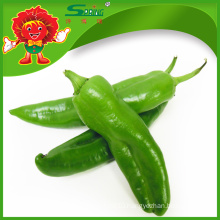 IQF frozen chilli, cheap green chillies