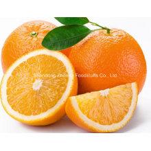 Top Qualität chinesische Navel Orange