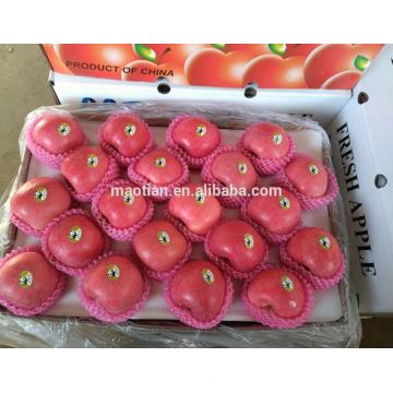 Fruit frais de fuji de pomme à vendre