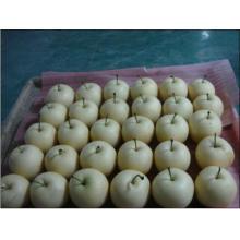 2016 Cosecha de corona de pera fresca en venta