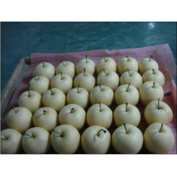 2016 Crop Crown Fresh Pear on Sale