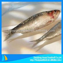 Sardines fraîches de poisson congelé