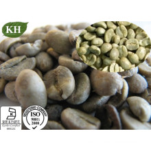Green Coffee Bean Extract 50% Total Chlorogenic Acids