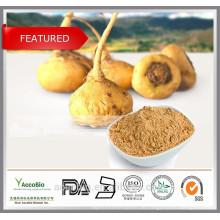 Großhandel Factory Supply 100% natürliche Maca Extrakt Pulver 20: 1 in Bulk Lepidium meyenii