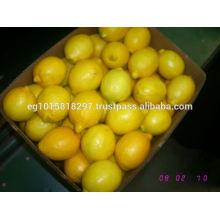 fersh lemon