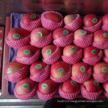 Qualité exportée de la pomme Qinguan rouge fraîche