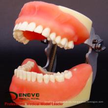 VENDER 12608 Modelo de práctica docente de cirugía oral
