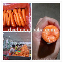 Fresh carrot(orangic ,Gap ,SGM,) factory directly supplier from China