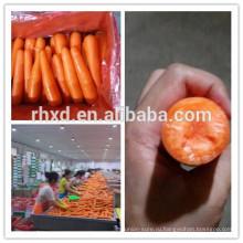Морковь свежая(orangic ,Гап ,СГМ) завода непосредственно поставщиком из Китая