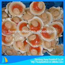 international market price of frozen half shell scallop