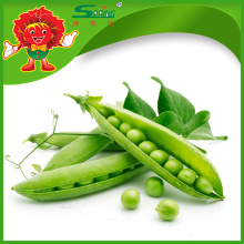 Frozen sugar snap peas from chinese supplier