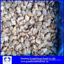 Frozen Ruditapes Philippinarum clam meat