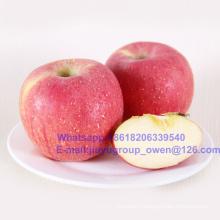 Export Grade China Top Quality New Crop FUJI Apple
