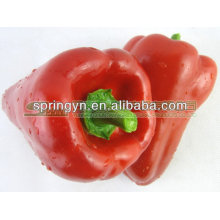 Bell Pepper/Color pepper