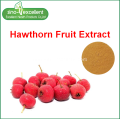Hawthorn fruit extract power