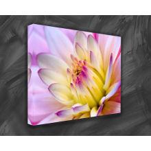 Fotos de arte para la pintura de tela