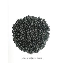 Haricot noir de haute qualité chinois