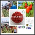 Ningxia organic goji berries with Kosher and Halal certificates red medlar