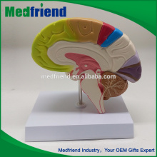 MFM002 Hot-Selling High Quality Low Price Anatomical Models Brain