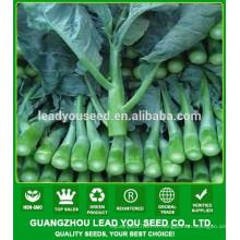 NKL03 Zhiru meilleur brocoli chinois, graines de chou frisé, graines de légumes
