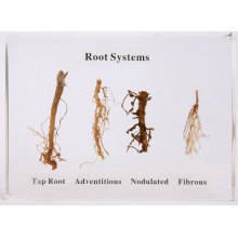Plant Roots ...