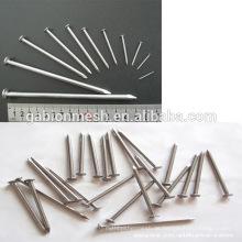 Gemeinsame Drahtnägel / galvanisierte gemeinsame Nägel & Nägel Fabrik