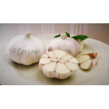 Fresh Red / Normal White Garlic 5.5 CM