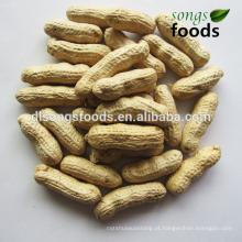 Amendoim torrado por atacado chinês, amendoim por atacado / melhor preço